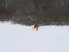 2010-02-14 Schneespaziergang - 12