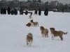 2010-02-14 Schneespaziergang - 122