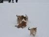 2010-02-14 Schneespaziergang - 123