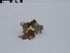 2010-02-14 Schneespaziergang - 125