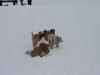 2010-02-14 Schneespaziergang - 126