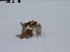 2010-02-14 Schneespaziergang - 128