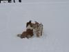 2010-02-14 Schneespaziergang - 129