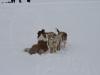 2010-02-14 Schneespaziergang - 130