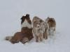 2010-02-14 Schneespaziergang - 131