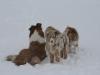 2010-02-14 Schneespaziergang - 132