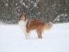 2010-02-14 Schneespaziergang - 14