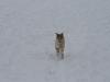 2010-02-14 Schneespaziergang - 142