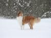 2010-02-14 Schneespaziergang - 15