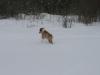 2010-02-14 Schneespaziergang - 16