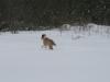 2010-02-14 Schneespaziergang - 17