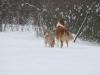 2010-02-14 Schneespaziergang - 22