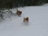 2010-02-14 Schneespaziergang - 4