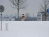 2010-02-14 Schneespaziergang - 40
