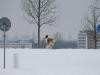 2010-02-14 Schneespaziergang - 41