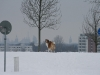2010-02-14 Schneespaziergang - 42