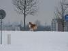 2010-02-14 Schneespaziergang - 43