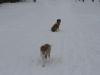 2010-02-14 Schneespaziergang - 44