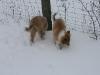 2010-02-14 Schneespaziergang - 45