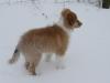 2010-02-14 Schneespaziergang - 48