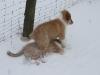 2010-02-14 Schneespaziergang - 49