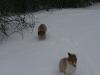 2010-02-14 Schneespaziergang - 5