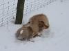 2010-02-14 Schneespaziergang - 51