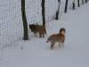 2010-02-14 Schneespaziergang - 52