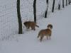 2010-02-14 Schneespaziergang - 53