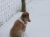 2010-02-14 Schneespaziergang - 54