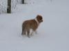 2010-02-14 Schneespaziergang - 56