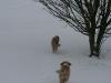 2010-02-14 Schneespaziergang - 57
