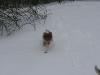 2010-02-14 Schneespaziergang - 6