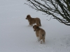 2010-02-14 Schneespaziergang - 60