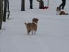 2010-02-14 Schneespaziergang - 64