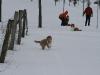 2010-02-14 Schneespaziergang - 67