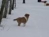 2010-02-14 Schneespaziergang - 71