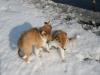 2010-02-20 Bolzum - 14