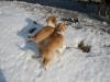 2010-02-20 Bolzum - 16