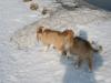 2010-02-20 Bolzum - 19