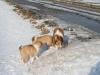 2010-02-20 Bolzum - 27