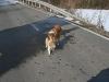2010-02-20 Bolzum - 58