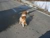 2010-02-20 Bolzum - 59
