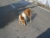 2010-02-20 Bolzum - 61