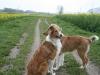 2010-04-27 Schnappschüsse - 17