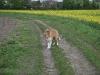 2010-04-27 Schnappschüsse - 180