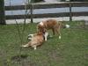 2010-04-27 Schnappschüsse - 193