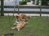 2010-04-27 Schnappschüsse - 195
