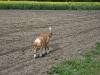 2010-04-27 Schnappschüsse - 93