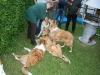 2010-05-23 Treffen BI - 139